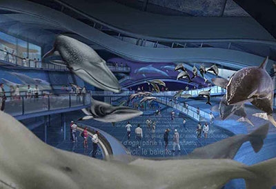 International center for the cetacean preservation